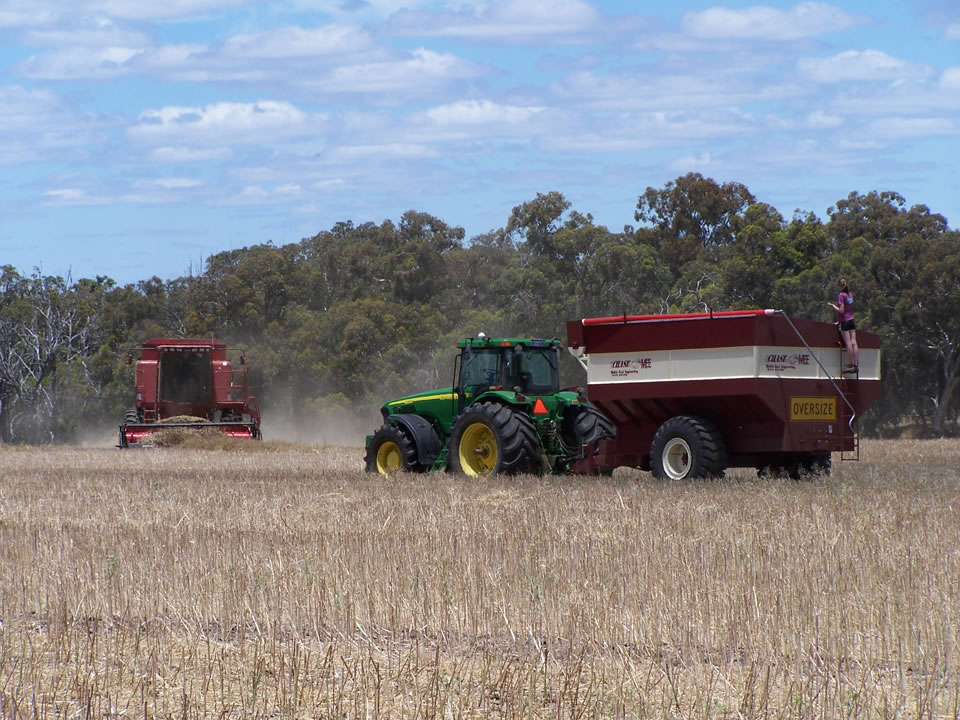 Harvest in Action